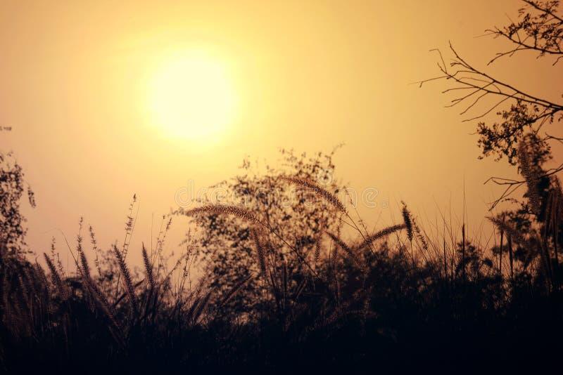 Härligt naturlandskap av solen, träd och himmel aftonskott av bilden, var solen ställer in royaltyfri fotografi