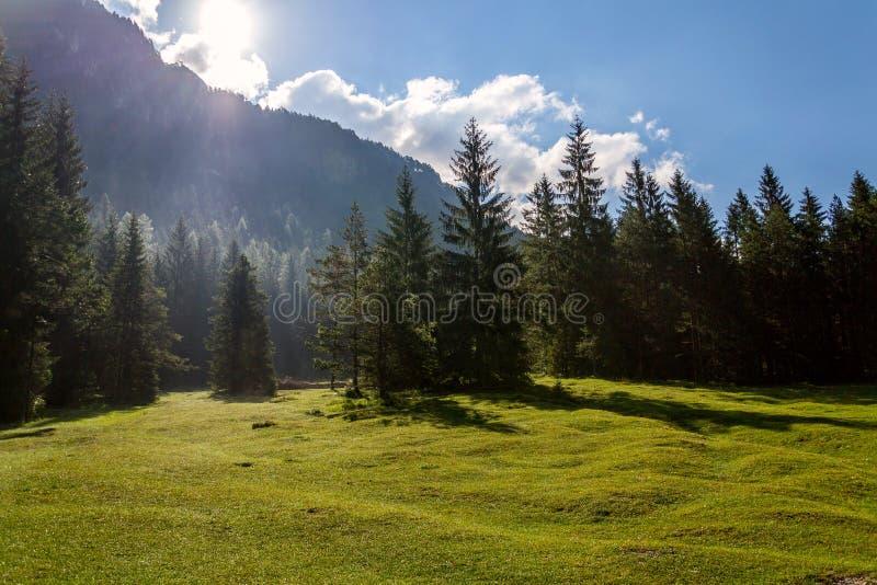 Härligt naturlandskap på sjön Pillersee med den djupa skogen och Seehorn berget, Sankt Ulrich f.m. Pillersee, Österrike, solig so royaltyfri bild