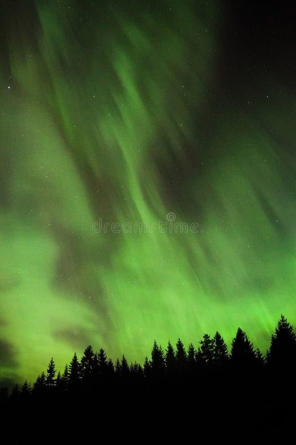 Härligt norrsken i Estland royaltyfri foto