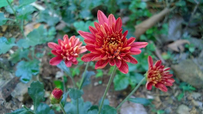härligt och bedöva fotoet av blommor arkivbild