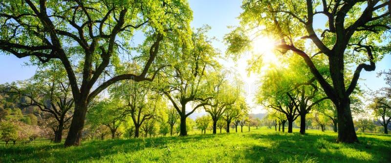 Härligt panorama- grönt landskap med träd i rad royaltyfria bilder
