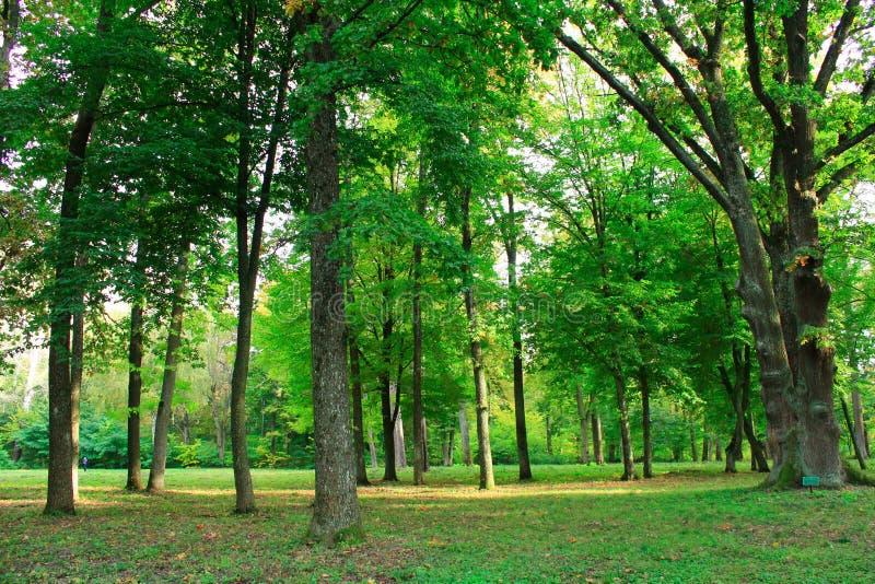 Härligt parkera med många gröna träd fotografering för bildbyråer