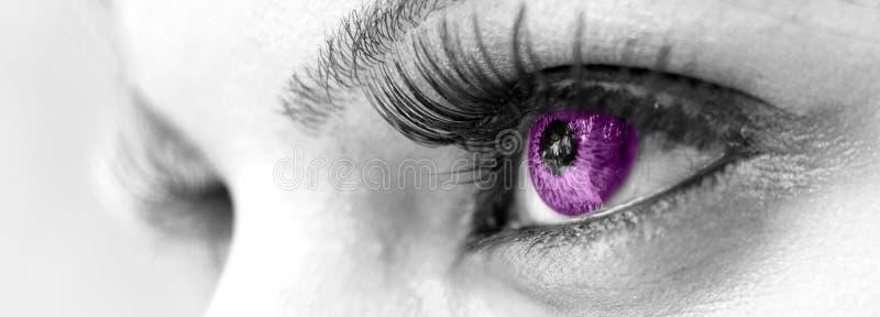 Härligt purpurt öga -, kvinnligt royaltyfri foto