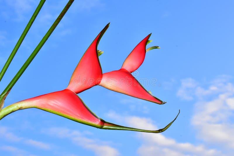 Härligt rött exotiskt blommaslut upp i solskenet fotografering för bildbyråer