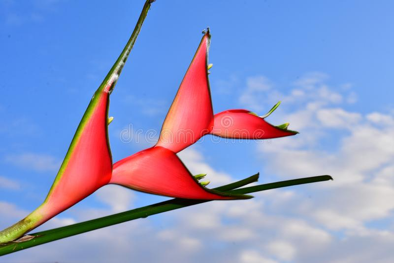Härligt rött exotiskt blommaslut upp i solskenet royaltyfria foton