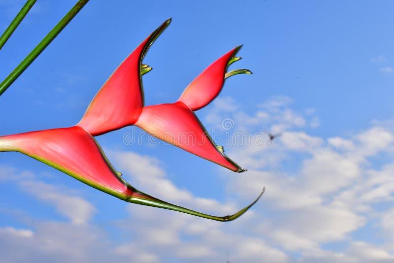 Härligt rött exotiskt blommaslut upp i solskenet arkivfoton