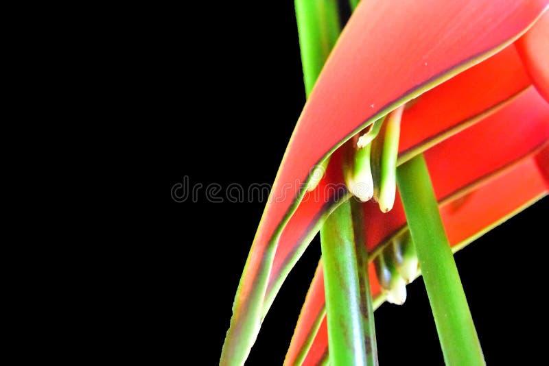 Härligt rött exotiskt blommaslut upp i solskenet royaltyfri fotografi