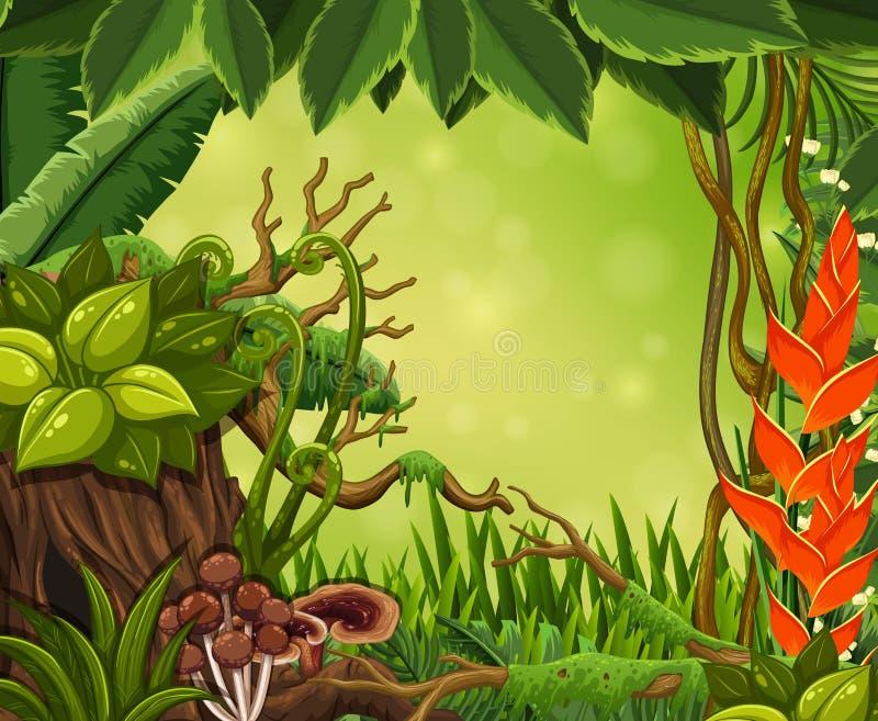 Härligt regn Forest Green Template royaltyfri illustrationer