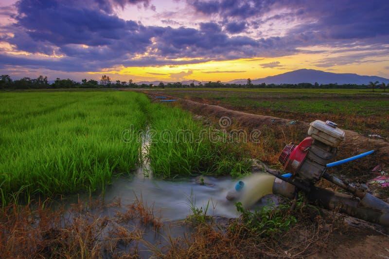 Härligt risfältlandskap av bönder i lantliga Chiang Mai, Thailand i aftonen royaltyfria foton