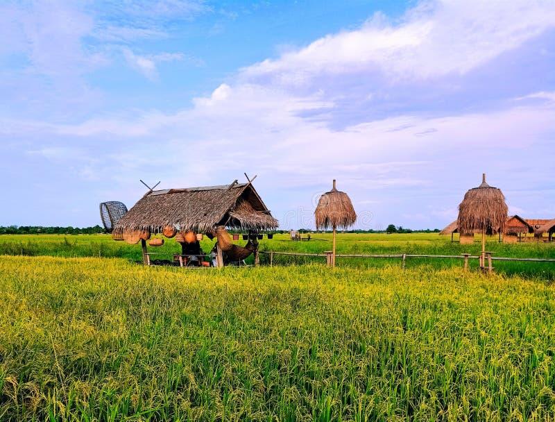 Härligt risfältlandskap, den gröna risfältet i kanchanaburien, Thailand royaltyfri foto