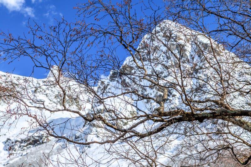 Härligt sceniskt landskap av snö täckte Kaukasus bergmaxima på solig dag på våren med blå himmel och kala trädfilialer på arkivbild