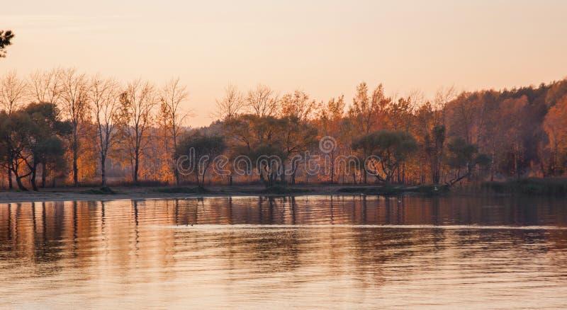 Härligt sjölandskap, fåglar och solnedgång Guld- rosa vågor, horisontlinje och träd på vatten royaltyfria foton
