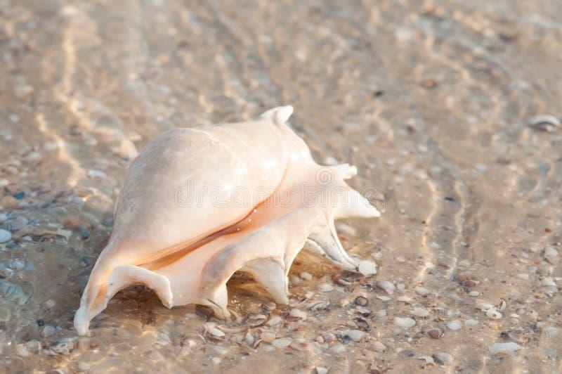 Härligt skal på stranden i sanden royaltyfri foto