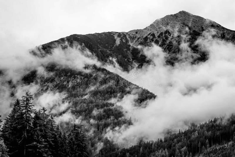 Härligt skott av dimmiga berg i en skog royaltyfri foto