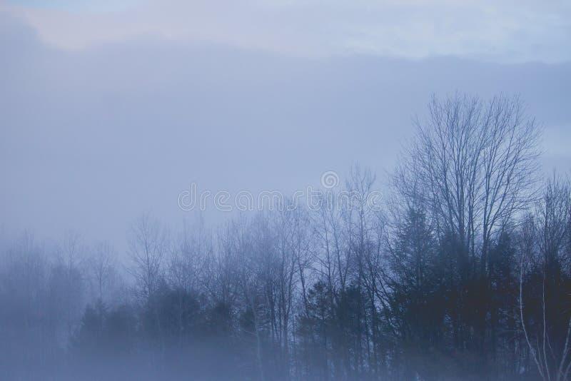 Härligt skott av en dimmig mörk skog med en molnig himmel under vinter royaltyfri bild