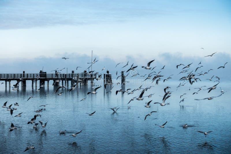Härligt skott av en pir på kusten av havet med en stor koloni av att flyga iväg för seagulls arkivbilder