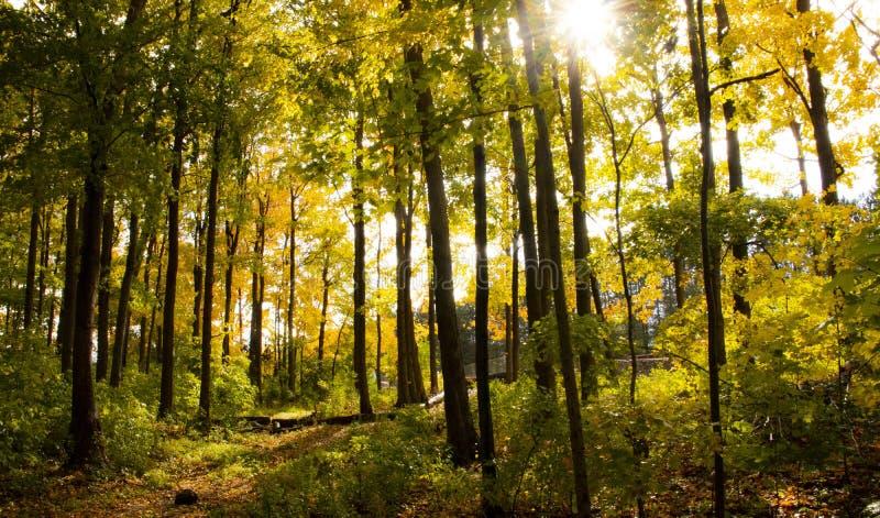 Härligt skott av ett mest forrest med högväxta träd på en solig dag fotografering för bildbyråer