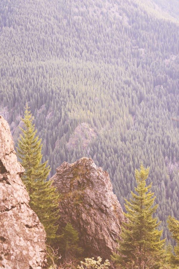 Härligt skott av höga steniga berg och en skog royaltyfria foton