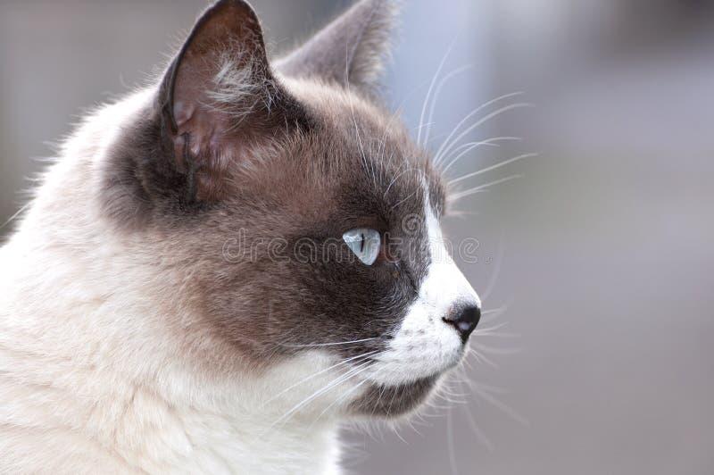 Härligt skyddsremsapunktslut upp katts framsida royaltyfri bild