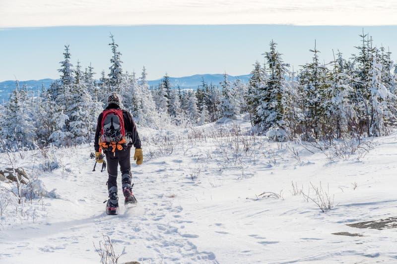 Härligt snöig landskap i Quebec, Kanada royaltyfri bild