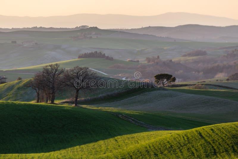 Härligt solnedgångTuscany landskap i vårtid med gröna kullar för våg Tuscany Italien, Europa arkivfoto