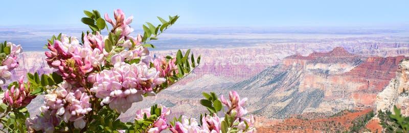 Härligt sommarberglandskap i Arizona fotografering för bildbyråer