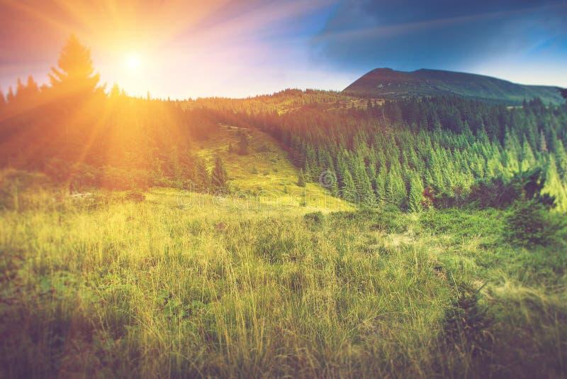 Härligt sommarberglandskap på solsken arkivbild