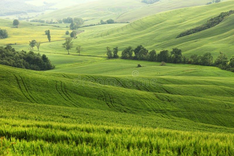 Härligt sommarlandskap i Tuscany arkivbilder