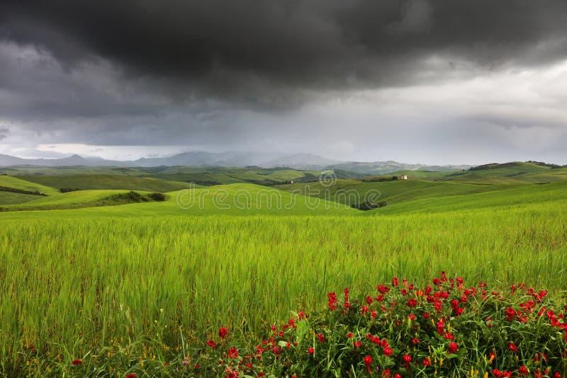 Härligt sommarlandskap i Tuscany i en stormig dag royaltyfria bilder