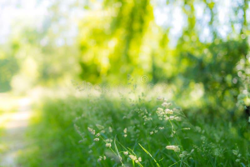 Härligt sommarlandskap med att blomstra ängen och blommor lös vårsommar blommar att blomma royaltyfri fotografi