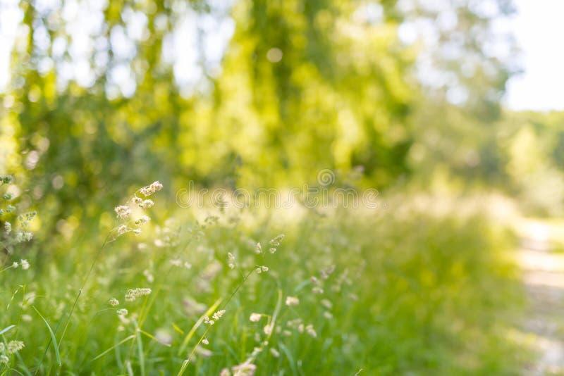 Härligt sommarlandskap med att blomstra ängen och blommor lös vårsommar blommar att blomma arkivbilder
