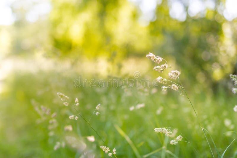 Härligt sommarlandskap med att blomstra ängen och blommor lös vårsommar blommar att blomma arkivfoton