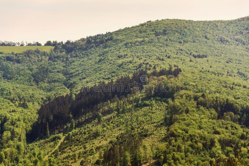 Härligt sommarlandskap med den färgrika blandade skogen runt om den Zitkova byn, vita Carpathians, trämångfald arkivbild