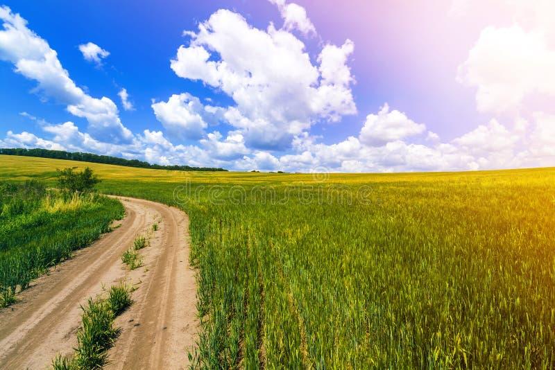 Härligt sommarlandskap med nytt grönt gräs, smutsgrusvägen, blå himmel och vita pösiga moln Bana till och med skördfält royaltyfria bilder