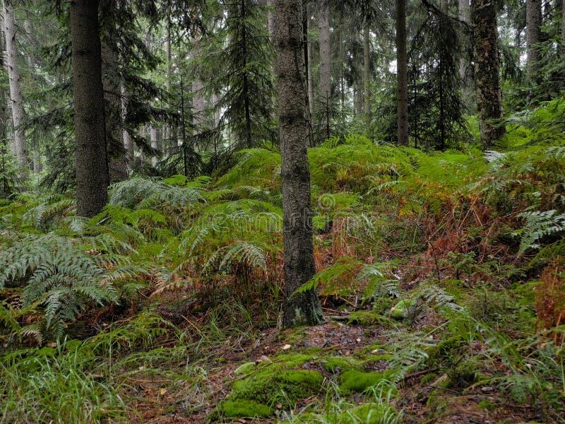 Härligt ställe av den orörda naturen i Adrspach stenig ekologireserv i Tjeckien royaltyfria foton