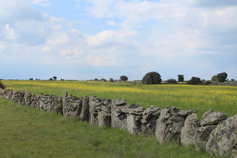 Härligt stena väggen som avskiljer fälten och djuren royaltyfri fotografi
