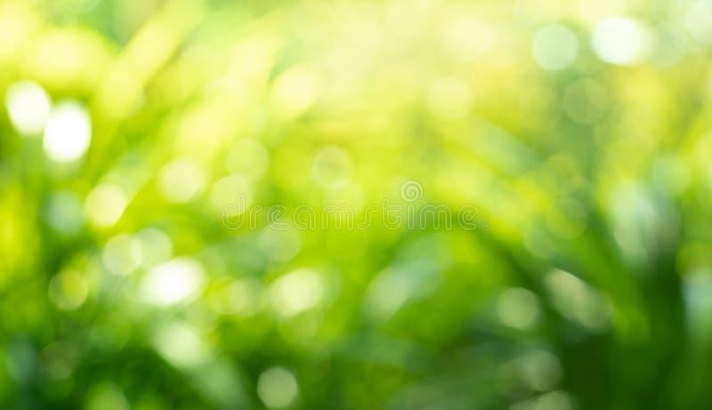 Härligt suddighetsgrönskablad i forestnaturebakgrundsidéer fotografering för bildbyråer