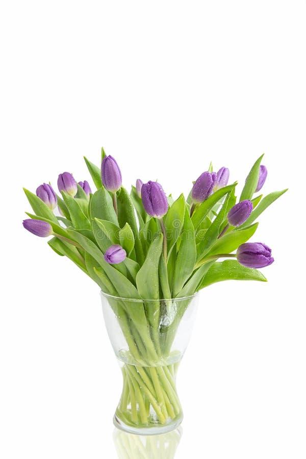 Härligt tänd - purpurfärgade tulpan med sidor som isoleras på vit bakgrund Vårblommor och växter Feriebakgrunder royaltyfri bild