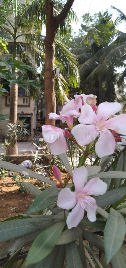 Härligt tänd - rosa blommor i trädgården arkivbilder
