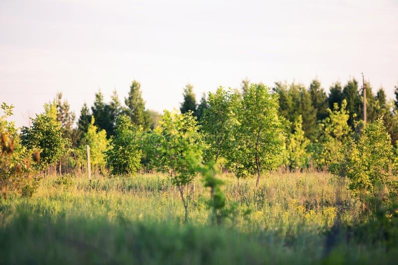 Härligt trä i solnedgångsolen royaltyfri bild