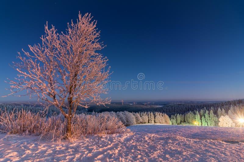 Härligt träd i snö royaltyfri foto