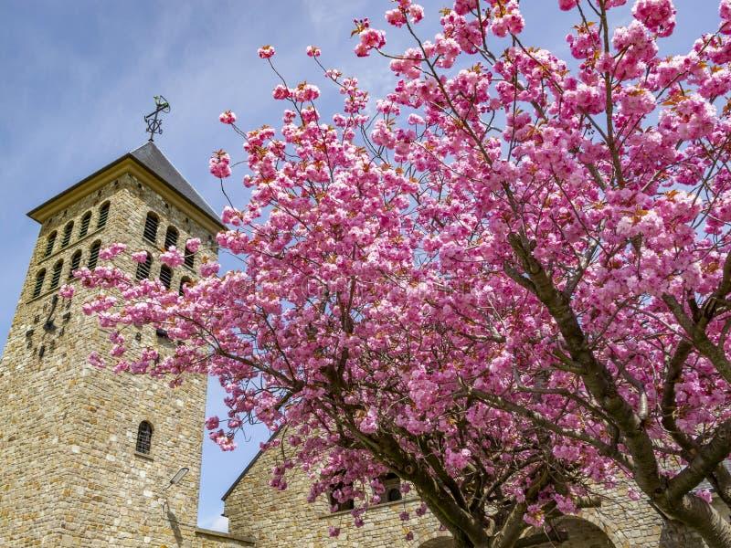Härligt träd Maj för körsbärsröd blomning framme av en kyrklig byggnad, detalj arkivfoto