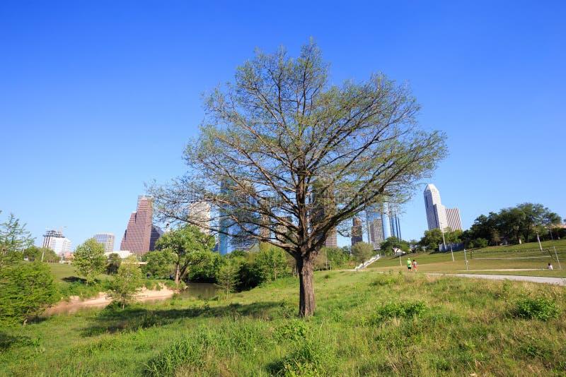 Härligt träd med sikt av den i stadens centrum Houston staden, Texas i en vara royaltyfria foton