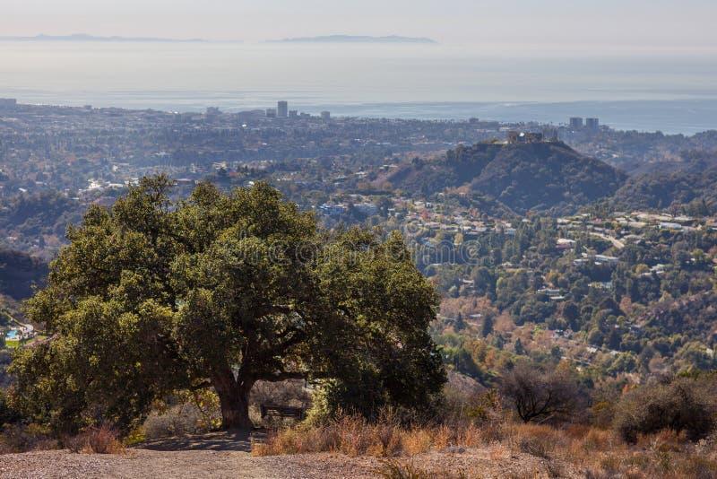 Härligt träd på överkanten av den Kenter slingavandringen som förbiser västra Los Angeles: Santa Monica Venedig, Beverly Hills arkivbild
