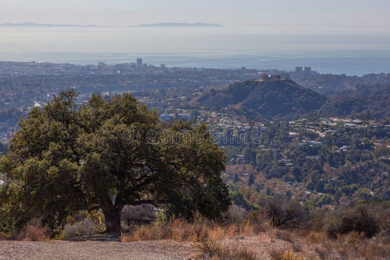 Härligt träd på överkanten av den Kenter slingavandringen som förbiser västra Los Angeles: Santa Monica Venedig, Beverly Hills arkivbilder