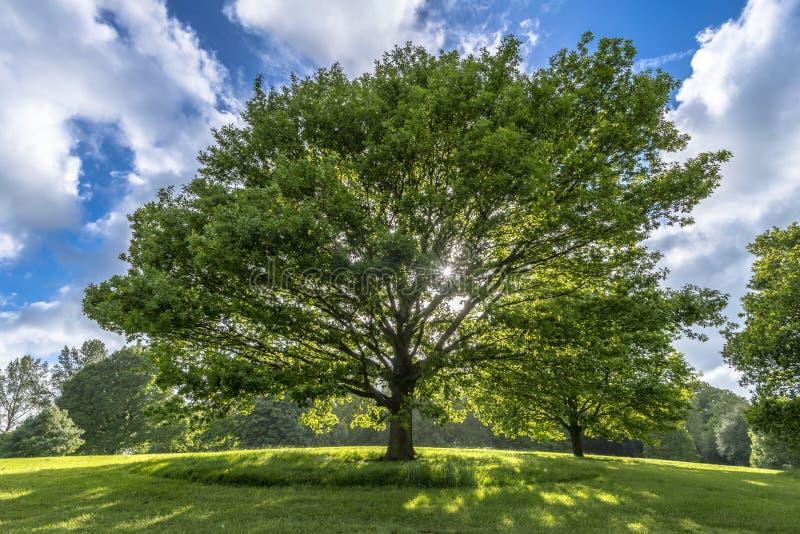 Härligt träd på kullen i vår royaltyfri foto