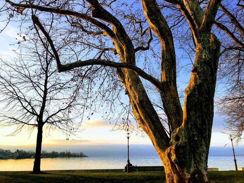 Härligt träd på solnedgången nära sjön royaltyfria bilder