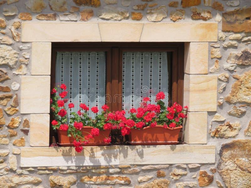 Härligt träfönster som dekoreras med röda blommor av intensiva färger royaltyfri foto