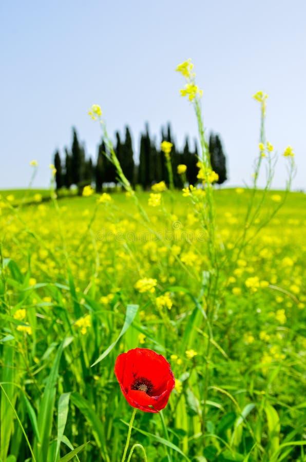Härligt Tuscany landskap, Italien royaltyfri fotografi