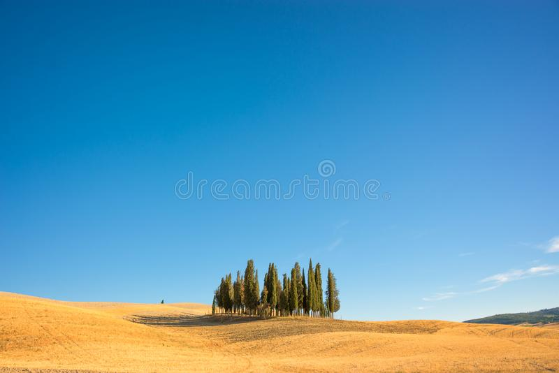 Härligt typisk tuscan landskap med cypressträd i ett fält i sommar, Val D ` Orcia, Tuscany Italien fotografering för bildbyråer